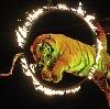 Цирки в Домодедово