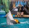 Дельфинарии, океанариумы в Домодедово