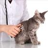 Ветеринарные клиники в Домодедово
